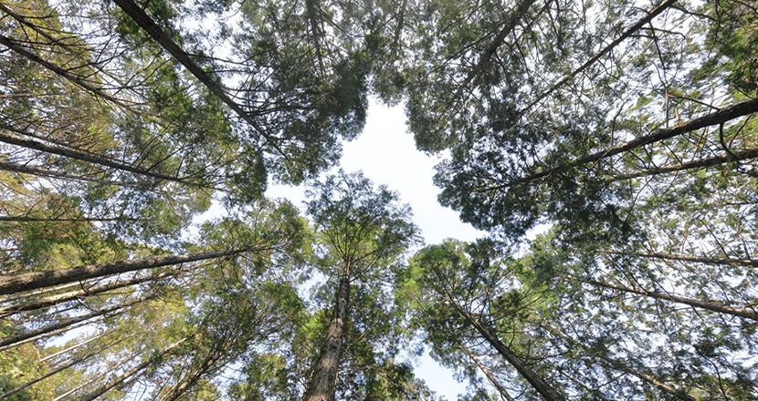 癒しの香りで毎日が森林浴気分
